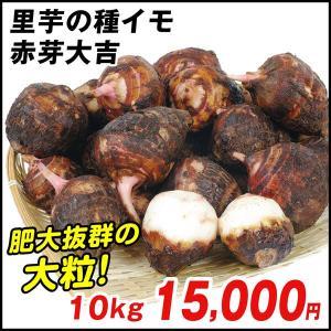 種いも 里いも 宮崎産 赤芽大吉 10kg / さといも サトイモ たね芋 たねいも