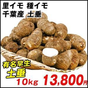 種いも 里いも 千葉産 土垂 10kg / さといも サトイモ たね芋 たねいも