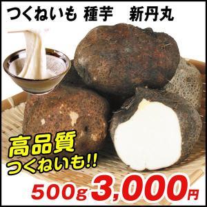 山いも種芋 つくねいも 新丹丸 500g / やまいも ヤマイモ たね芋 たねいも