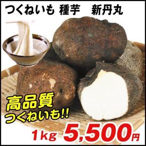 山いも種芋 つくねいも 新丹丸 1kg / やまいも ヤマイモ たね芋 たねいも