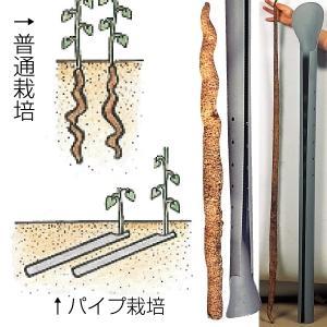 種いも じねんじょパイプ 5本 / やまいも ヤマイモ 栽培 資材