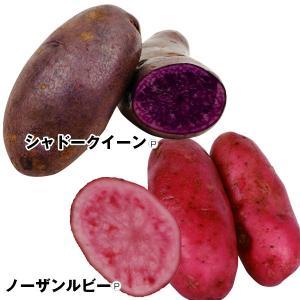 じゃがいも種芋 個性派じゃがいもセット 2種2kg / ジャガイモ 馬鈴薯 たね芋 たねいも