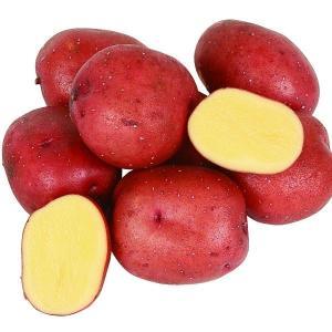 じゃがいも種芋 インカルージュP 1kg / ジャガイモ 馬鈴薯 たね芋 たねいも