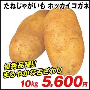 じゃがいも種芋 ホッカイコガネ 10kg / ジャガイモ 馬鈴薯 たね芋 たねいも