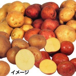 種いも じゃがいも福袋 5種5kg / ジャガイモ 馬鈴薯 ...