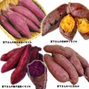 イモヅル(芋づる) 宮下さんのイモヅルセット 4種100本 / さつまいも苗 サツマイモ苗 薩摩芋|kokkaen