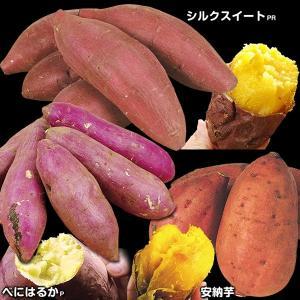 イモヅル(芋づる) 大人気さつまいもイモヅルセット 3種30本 / さつまいも苗 サツマイモ苗 薩摩芋|kokkaen