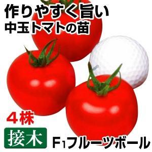 接木野菜苗 中玉トマト 接木F1フルーツボール 4株 / とまと 苗 夏野菜 家庭菜園|kokkaen