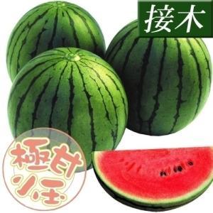 接木野菜苗 小玉スイカ 接木F1リトルハニー 4株 / やさ...