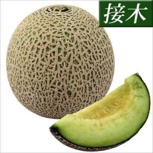 接木野菜苗 メロン 接木F1バルコニーズ 2株 / やさい ...