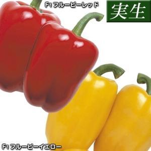 商品情報 F1フルーピーレッド:肉厚の美味品種。完熟果はビタミンA・C豊富で、甘味が多く、着果も安定...