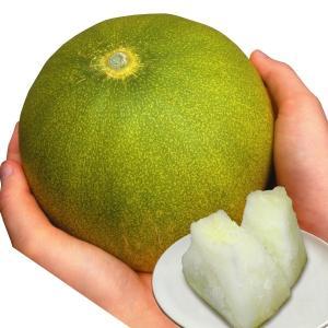 野菜たね メロン F1 レモーネ 1袋(8粒) / 種 タネ...