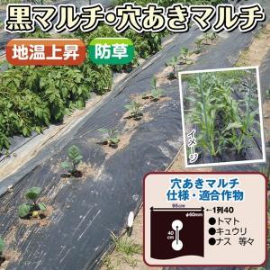 野菜たね 資材 黒穴あきマルチ1列40 1枚  / タネ 種|kokkaen