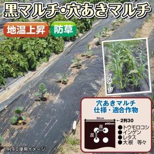 野菜たね 資材 黒穴あきマルチ2列30 1枚  / タネ 種|kokkaen