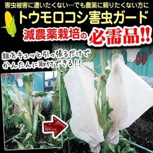 送料無料 野菜たね資材 トウモロコシ害虫ガード 2袋(1袋10枚入)|kokkaen