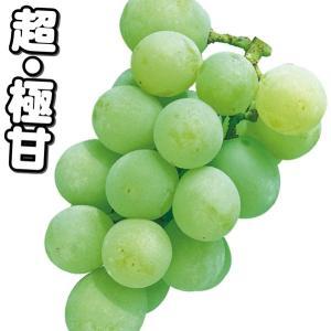 果樹苗 ブドウ 黄玉 3株 / 果物苗 フルーツ苗 葡萄 ぶ...