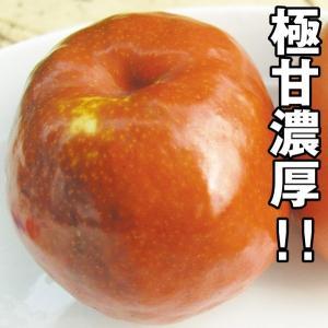 果樹苗 ナツメ 国光棗 1株 / 果物苗 フルーツ苗 kokkaen