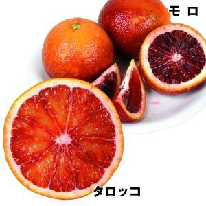 果樹苗 カンキツ ブラッドオレンジセット 2種2株 / 果物...
