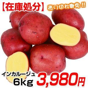【在庫処分】じゃがいも種芋 インカルージュP 6kg / ジ...