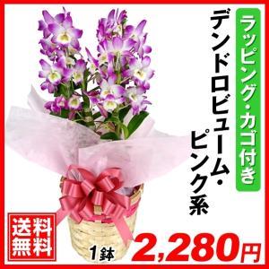 送料無料 洋ラン デンドロビューム ピンク系 ラッピング・カゴ付き 1鉢|kokkaen