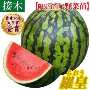 野菜苗特別企画 スイカ 接木F1羅皇 1株 /送料グループ【R25D3】|kokkaen