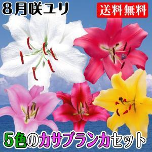 送料無料 8月咲ユリ 5色のカサブランカセット 5種15球
