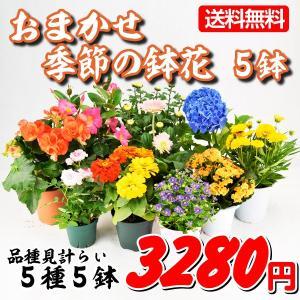 送料無料 鉢花 おまかせ季節の鉢花 5鉢...