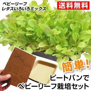 野菜たね ピートバンFH-180 種まき栽培セット 【ベビーリーフサラダの種】 1組 送料無料
