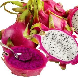 送料無料 多肉植物苗 ドラゴンフルーツセット 2種2株