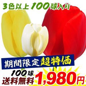 送料無料 期間限定 チューリップ 球根 おもいやりセット 100球 3色以上