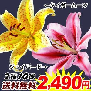 送料無料 ユリ 球根 スペシャル花ユリセット 2種10球(各5球) /ゆり