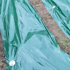 種まき栽培資材 グリーンマルチ 95cm×5m 1個 / 数量限定|kokkaen