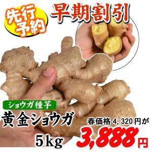 ネット限定★【早期割引】種ショウガ 黄金ショウガ 5kg