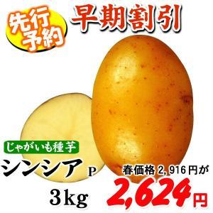 ネット限定★【早期割引】じゃがいも 種芋 シンシアP 3kg