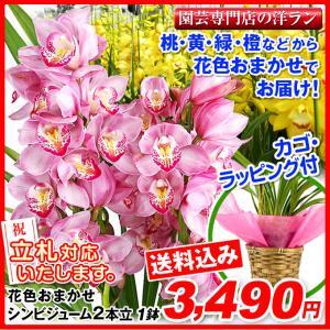 【送料込】花色おまかせシンビジューム 2本立ち 1鉢|kokkaen