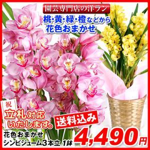 鉢花 ギフト用花色おまかせシンビジューム 3本立ち 1鉢【送料込】|kokkaen