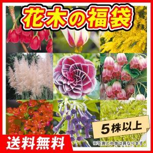 送料無料 花木苗の福袋 5株以上 kokkaen