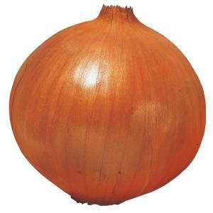 玉ねぎ苗 甘早果 200本 / 国華園|kokkaen