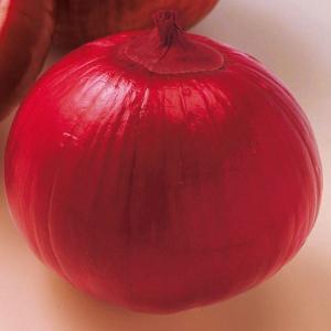 玉ねぎ苗 千紅一号 200本|kokkaen