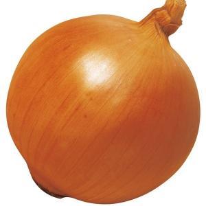 玉ねぎ苗 F1つり玉パーフェクト 200本 / 国華園|kokkaen