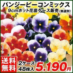 商品情報 開花が早く春まで咲き続けます。く お届け状態 9cmポット苗 開花期 11-5月。一年草。...