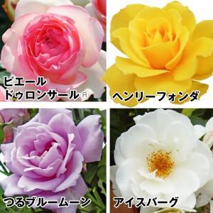 花木 バラ 激安美麗人気バラセット 4種4株 / 苗木 苗 薔薇 ばら|kokkaen