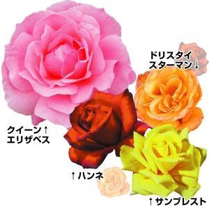 送料無料 バラ苗 大特価四季咲きバラセット 4種4株 / 苗木 苗 薔薇 ばら|kokkaen