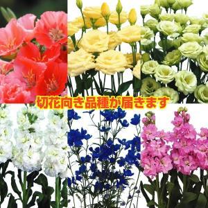 種 花たね 切花向き花たね福袋 15袋以上1組 / タネ|kokkaen