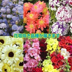 種 花たね 花壇向き花たね福袋 15袋以上1組 / タネ|kokkaen