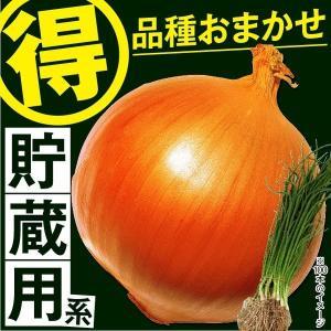 玉ねぎ苗 品種おまかせ 貯蔵用玉ねぎ 100本