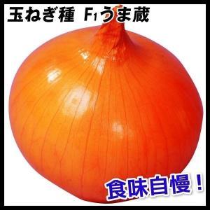 種 野菜たね 玉ねぎ F1うま蔵 1袋(5ml)/タネ たね たまねぎ タマネギ 玉葱 玉ネギ