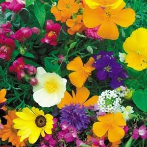 種 花たね 花壇向きミックス 1袋(300mg)/タネ たね|kokkaen