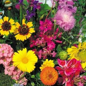 種 花たね 中高性ミックス 1袋(400mg)/タネ たね|kokkaen