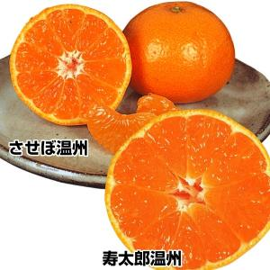 果樹苗 カンキツ 苗 苗木 絶品!高級みかんセット 2種2株 / ミカン 蜜柑|kokkaen
